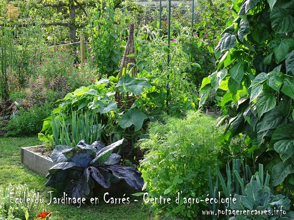 Les cultures au Potager en Carrés à la Française ®, méthode unique au monde pour cultiver un potager nourricier sur de petites surfaces